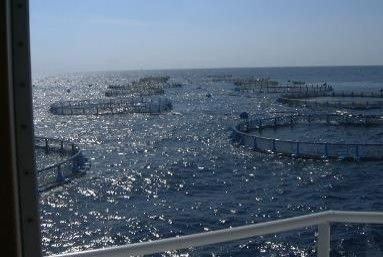 Gilt-head bream fisheries mooring design